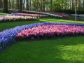 Keukenhof april 2019 06
