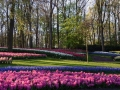 Keukenhof april 2019 07