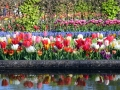 Keukenhof april 2019 22