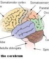 More senses than six: Proprioception