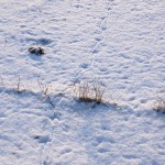 tractie sneeuw 04