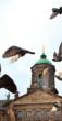 damrak duiven