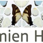 Damien Hirst Tate Modern