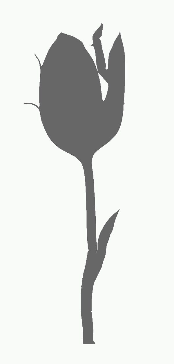 tulip cutout