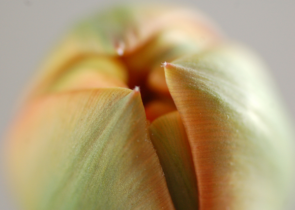 Tulpen april 2014 05