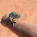 Chameleon_3039