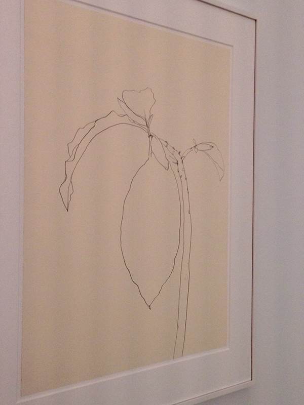ellsworth-kelly-datura-drawing-kl