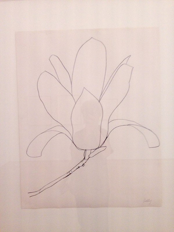 ellsworth-kelly-magnolia-drawing-kl