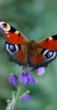 vlinders-02