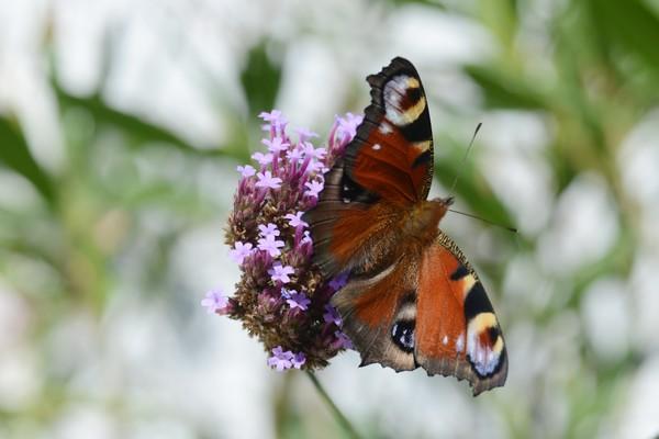 vlinders-03