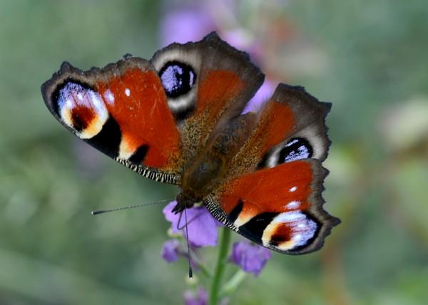 vlinders-04