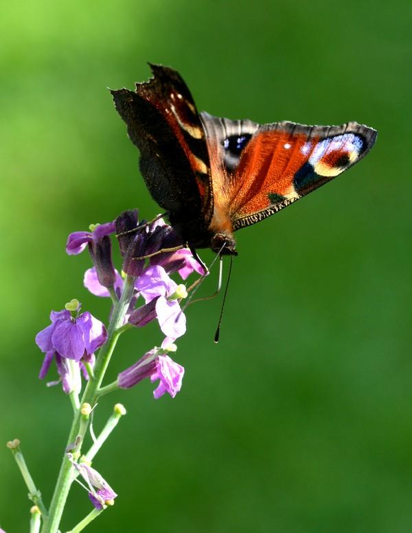 vlinders-08
