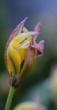 tulpen april 2017 03 17