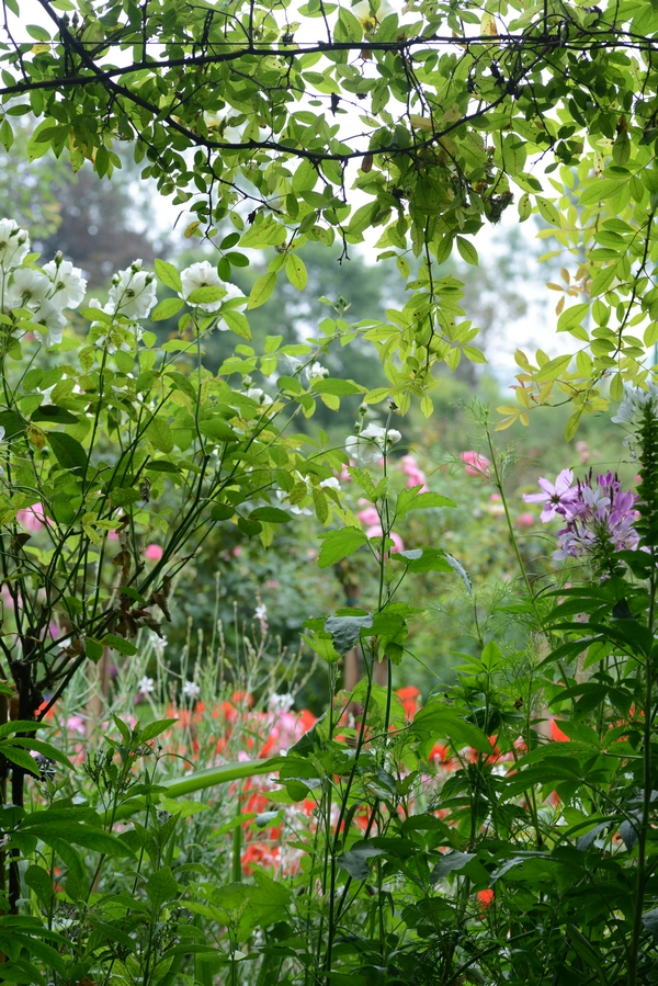 Monet Garden Giverny 16 july 2017 13