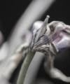 Tulip mania, time conscious
